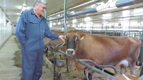 Veaux, vaches, cochons, couvées : plus d'homéo, moins d'antibios