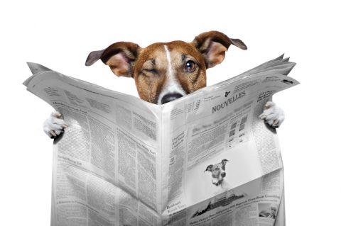 Pharmachien et grands médias : le point sur les i de la désinformation concernant l'homéopathie